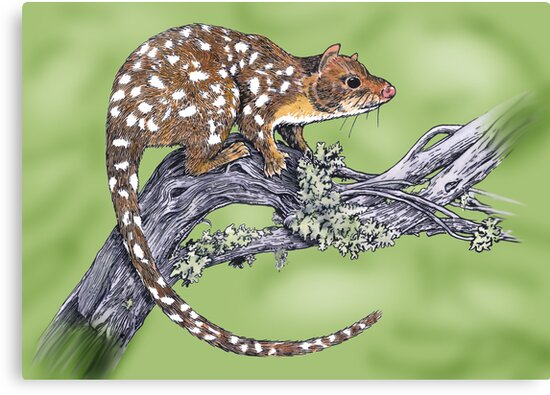 Spotted tailed Quoll by SnakeArtist