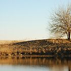 Lone Tree by Pond in Autumn by Suz Garten