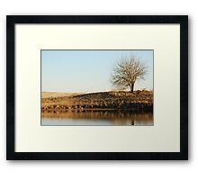 Lone Tree by Pond in Autumn Framed Print