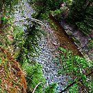 Southern Creek by punklins