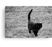 Through the Barb Wire Canvas Print