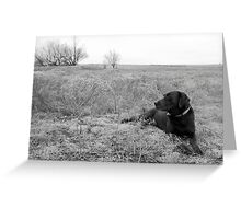 Labrador in Field Greeting Card