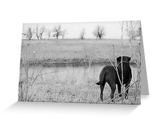 Labrador by Pond Greeting Card