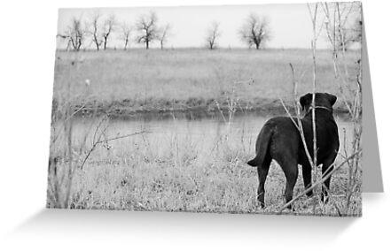 Labrador by Pond by Suz Garten