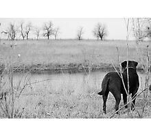Labrador by Pond Photographic Print