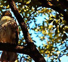 Bird of Prey by dangrieb