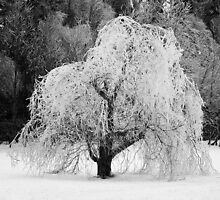 Ice tree by mayla-mortis
