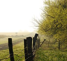 Misty Country Morning in Kansas by Suz Garten