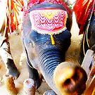 Thai Elephant by lisacred