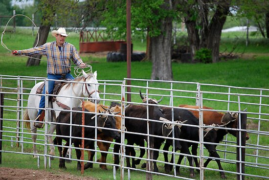 Herding the Steer Back to the Pen by Suz Garten