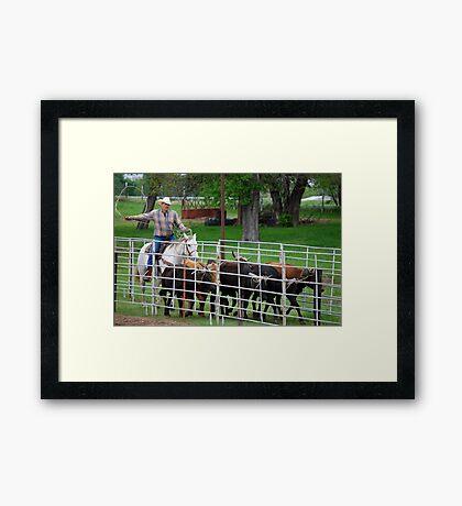 Herding the Steer Back to the Pen Framed Print