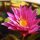Lotus 2 by lisacred
