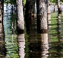 Flooded Forest by Alison Simpson