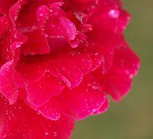 Rain Drops by Bob Hardy