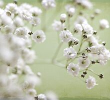 Lovely Baby's Breath by Lori411