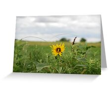 Lone Sunflower in Pasture Greeting Card