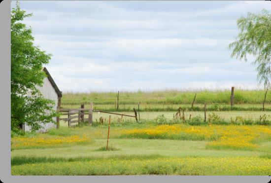 Kansas Country Solitude by Suz Garten