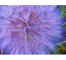 blue puff Photographic Print