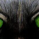 Cat Eyes by Susanne Correa