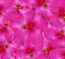 Hot Pink Hibiscus by Kylie Van Ingen