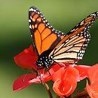 Butterfly by Lyn  Thomsen