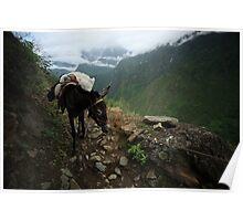 Pack Mule Poster