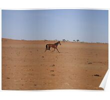 Australian Outback Brumby Poster