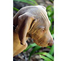 A Puppy Portrait Photographic Print