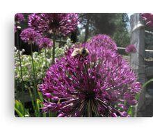 Bumble Bee & Allium Metal Print