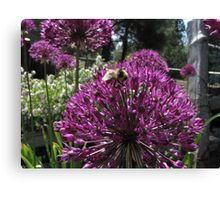 Bumble Bee & Allium Canvas Print