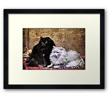 Persian Cats Painting Framed Print