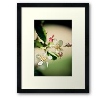 lightness of a rose Framed Print