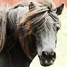 pony portrait by Alan Mattison