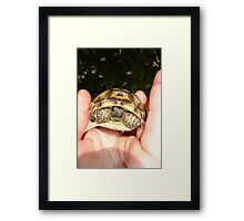 Ibera Greek Tortoise - You're A Babe Framed Print