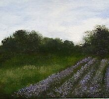 lavender field by benedicta