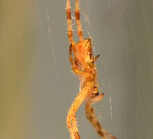 hanging from a tangled web by 1busymom