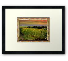 Alberta sunset sunflowers Framed Print