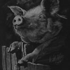 Pig in black. by Robert David Gellion