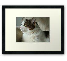 Willow..... Framed Print