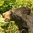 Black Bear - Hyder AK by Barbara Burkhardt