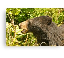 Black Bear - Hyder AK Canvas Print