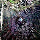 Fantasy Spider in a Natural Web by Daneann