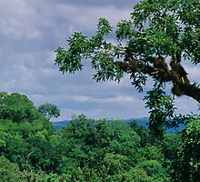 Jungle by fabrice chaix
