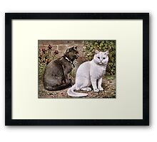 Shorthaired Cats Vintage Painting Framed Print
