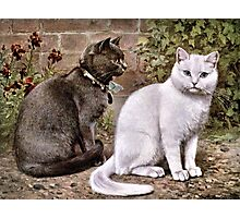Shorthaired Cats Vintage Painting Photographic Print