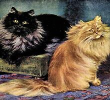 Persian Cats, Smoke and Orange by goldenmenagerie