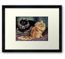 Persian Cats, Smoke and Orange Framed Print