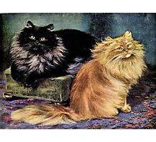 Persian Cats, Smoke and Orange Photographic Print