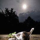 Suncatcher by Terri Chandler