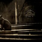 Cat on a graveyard by Igor Giamoniano